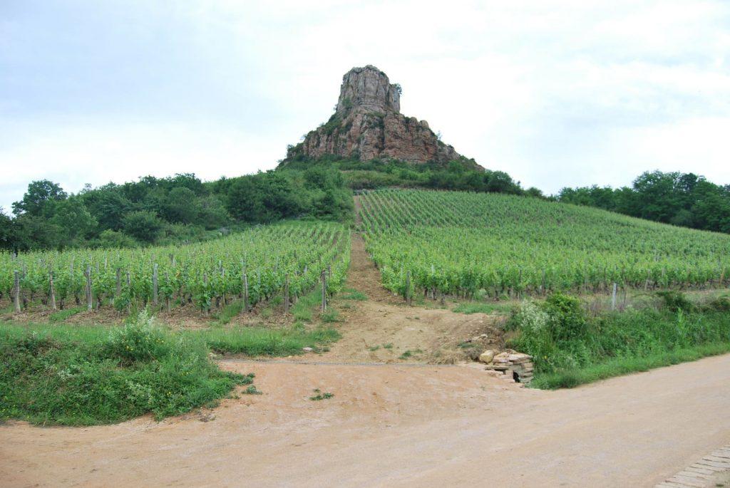Burgundia, Maconnais uprawa szczep Chardonnay