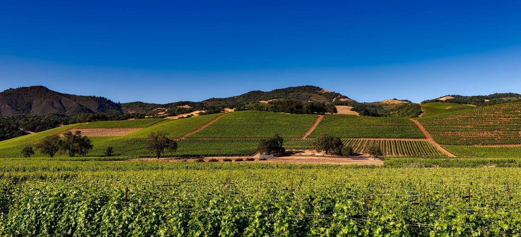 Zinfandel Napa Valley winnica