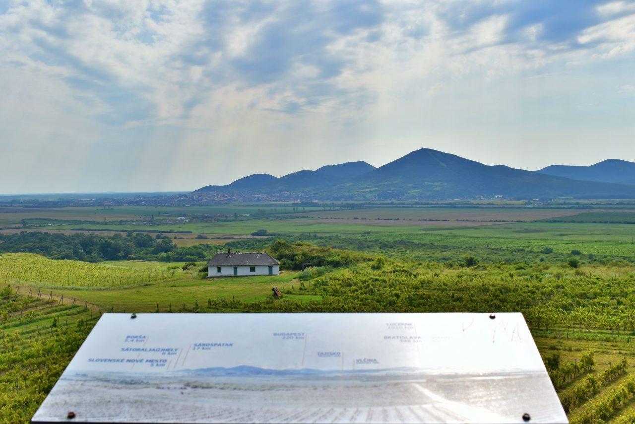 Panorama w winnicy tokaj
