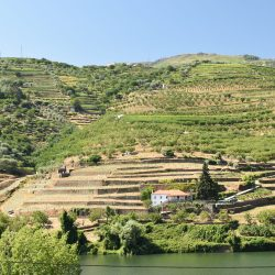 Socalcos i patamares w Douro
