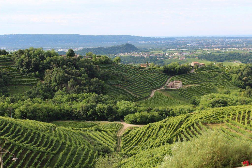 Wina musujące, Prosecco, gmina Treviso, Włochy