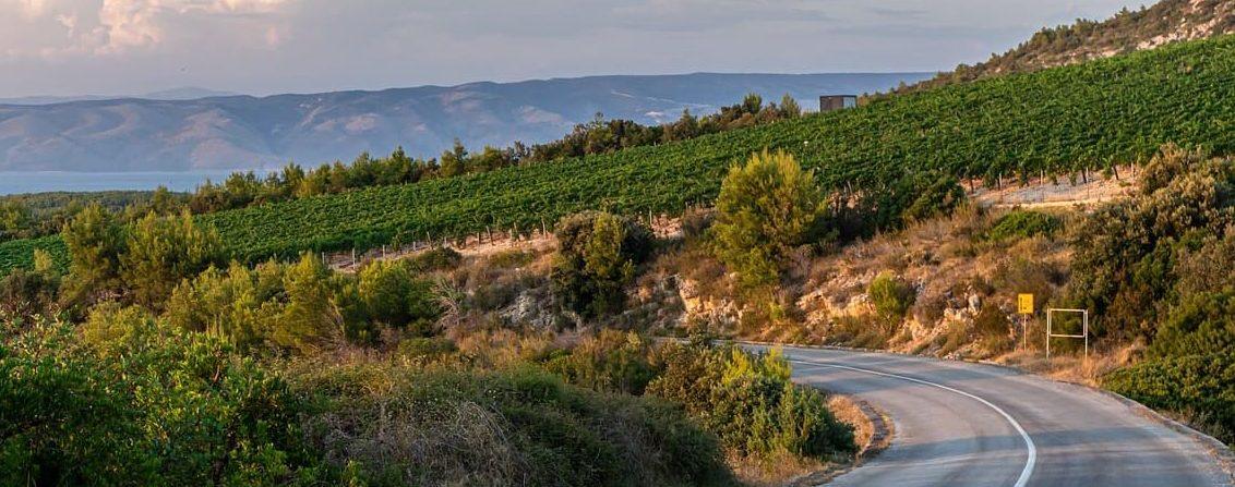 Wina z Chorwacji - krajobraz