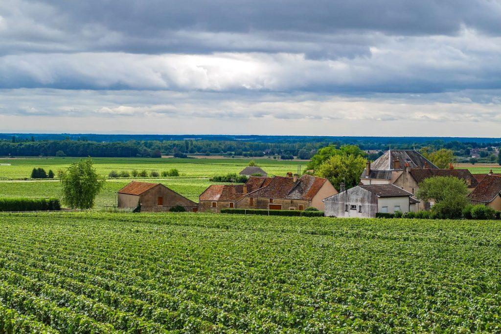 Świat wina, winnica Burgundia, Francja