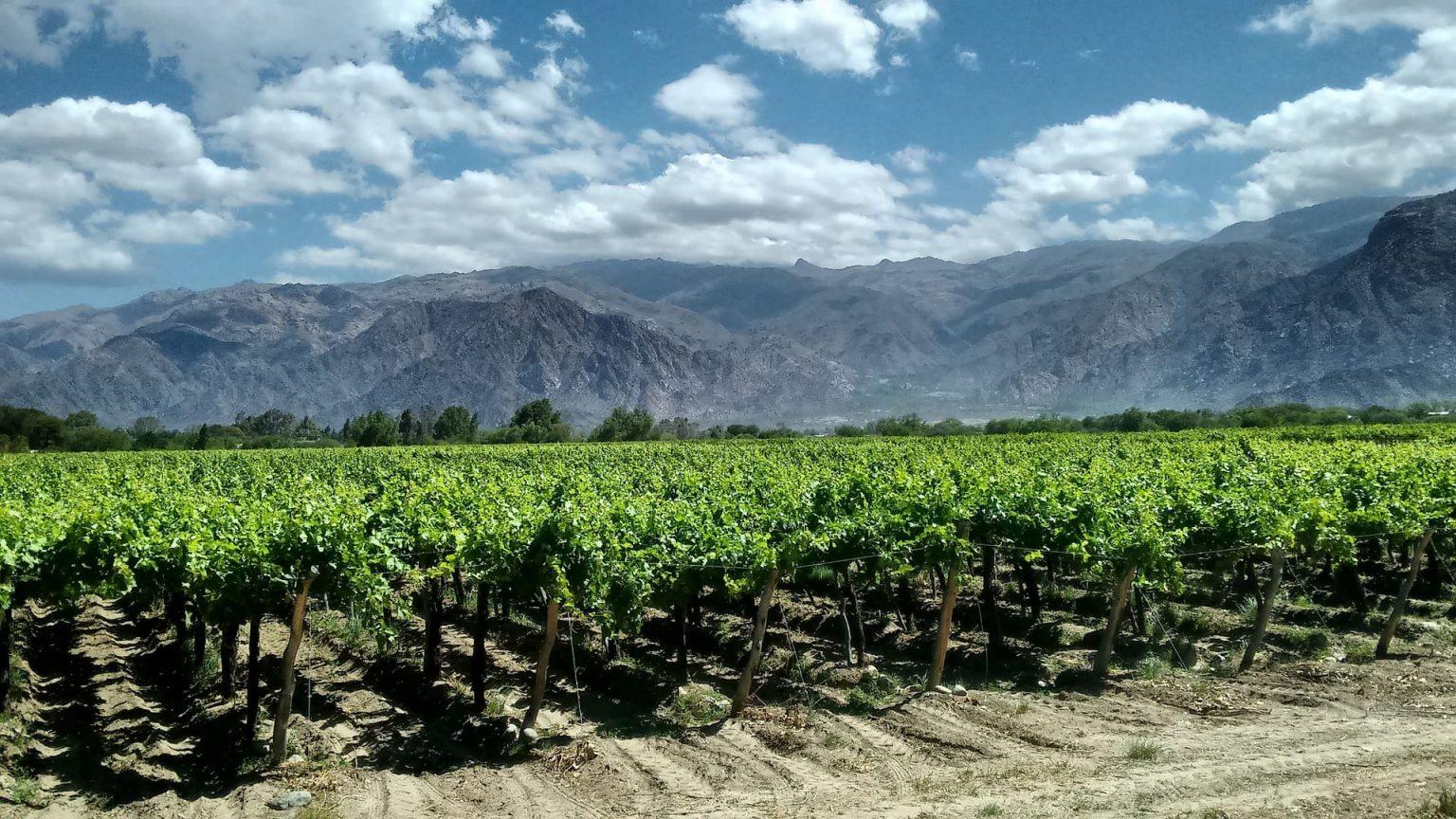 Winnica Cafayate, Argentyna