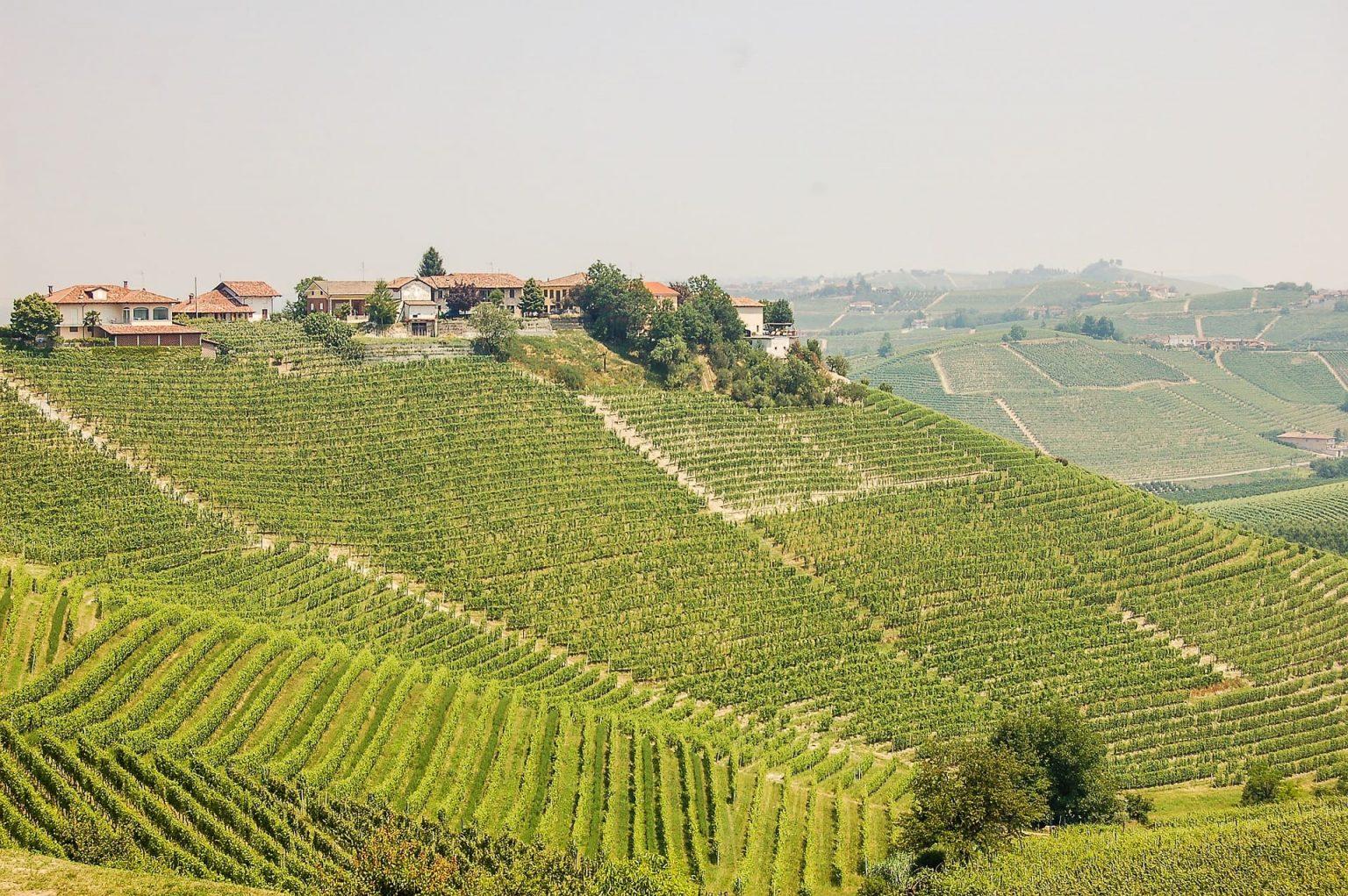 Winnica Piemont, Włochy