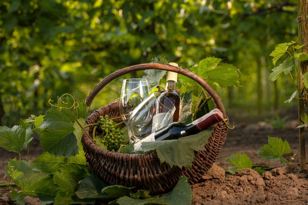 Winnica Słoneczny Zakątek - piknik