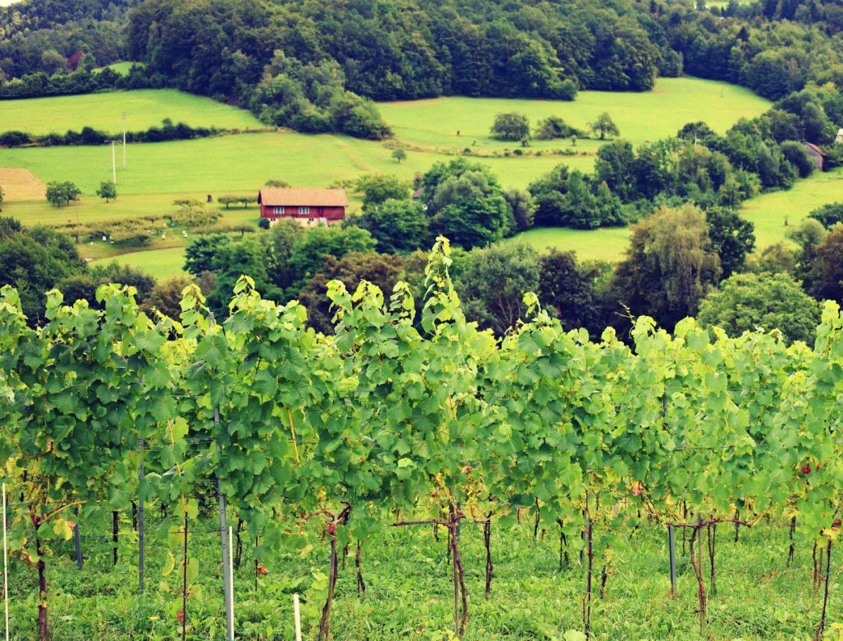 Winnica Zawadka panorama
