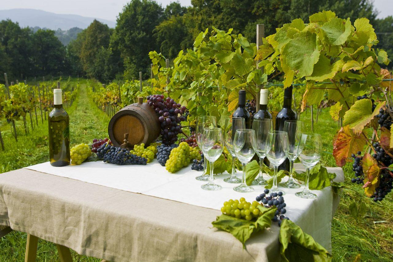 Winnica świdnicka, degustacja
