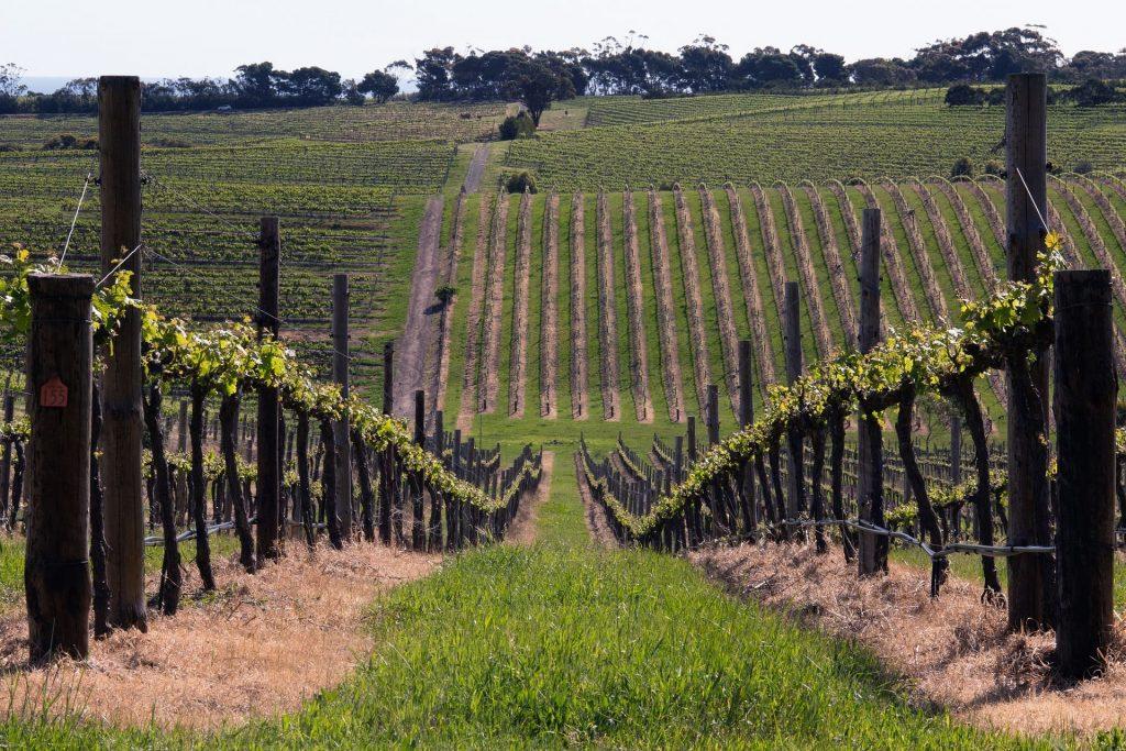 Winnica w McLaren Vale, Australia