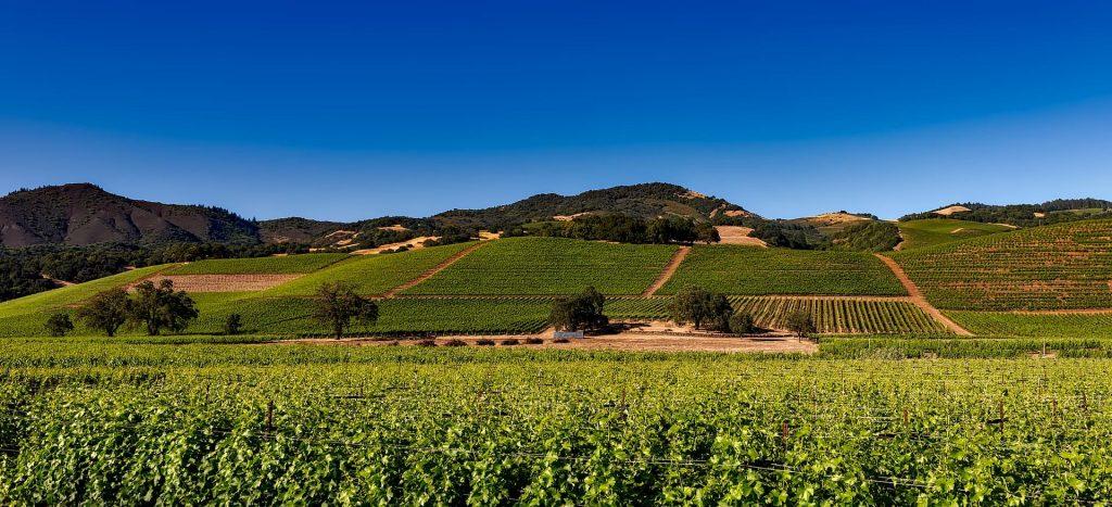 Winnica w Napa Valley, USA Cabernet Sauvignon