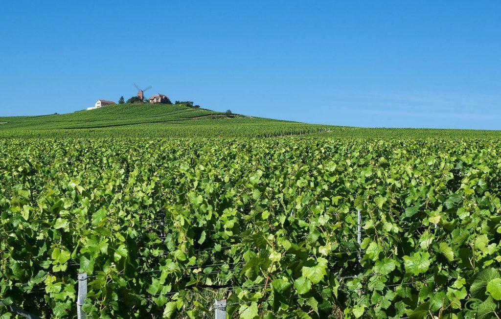 Szampan Winnica w Szampanii, Reims, Francja