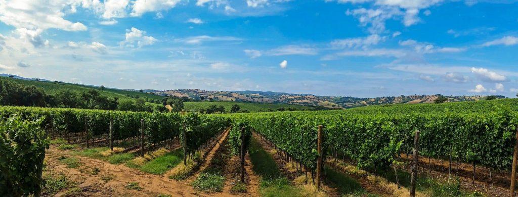 Winnica w Toskanii, Włochy