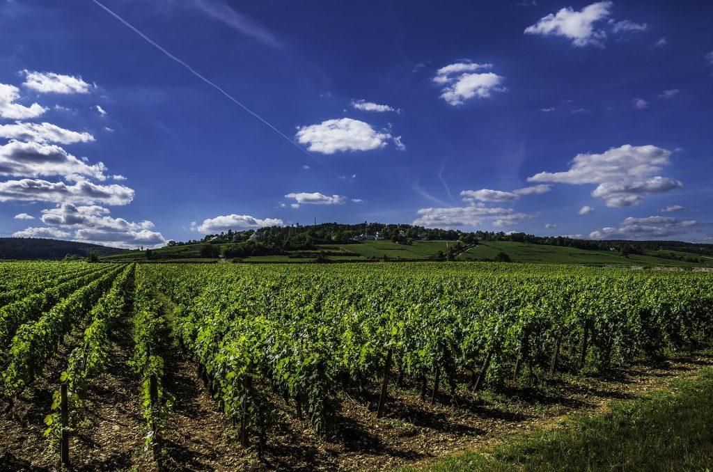 Winnice w Burgundii, Francja