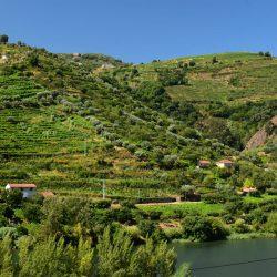 W dolinie rzeki douro - winnice