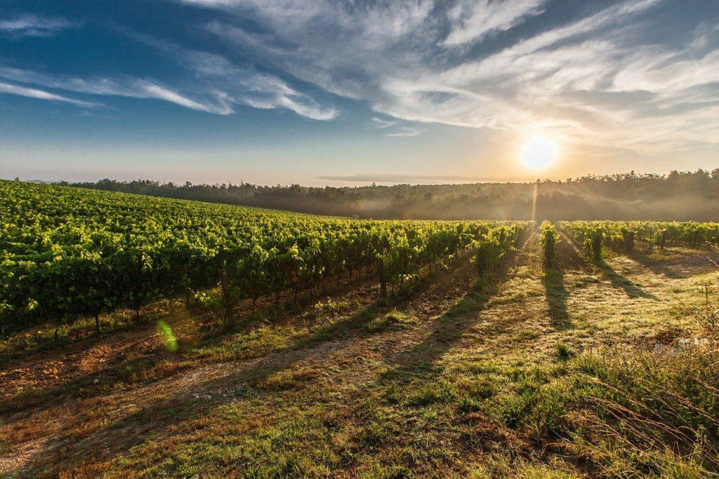Winnice w Tosanii, Włochy