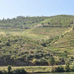 Winnice w dolinie rzeki Douro